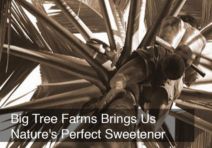 Big Tree Farms Brings Us Nature's Perfect Sweetener by @BlenderBabes