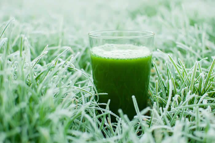 Joe Rogan Kale Green Smoothie Shake